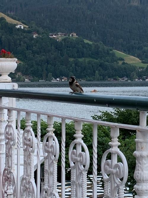 d 12 fugl á terrace